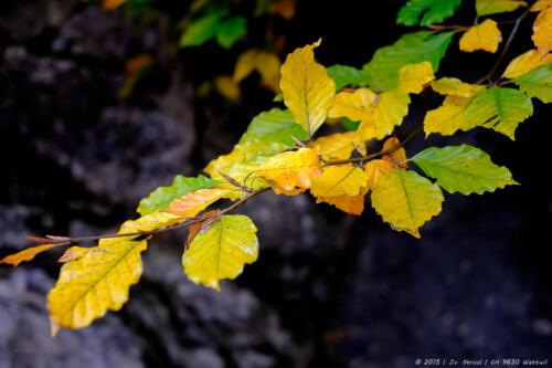 20151011_Herbst-8392